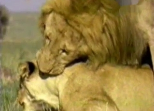 Passionate lion fucked his horny gf from behind
