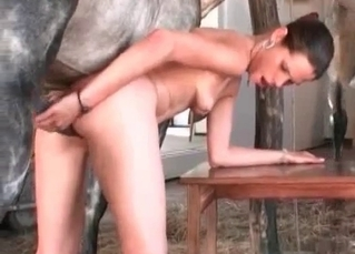 Elegant slut sucks a big stallion sausage