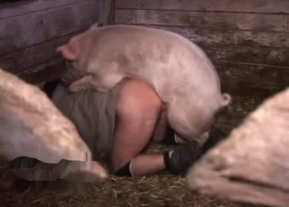 Phat booty gay dude fucking a hot pig